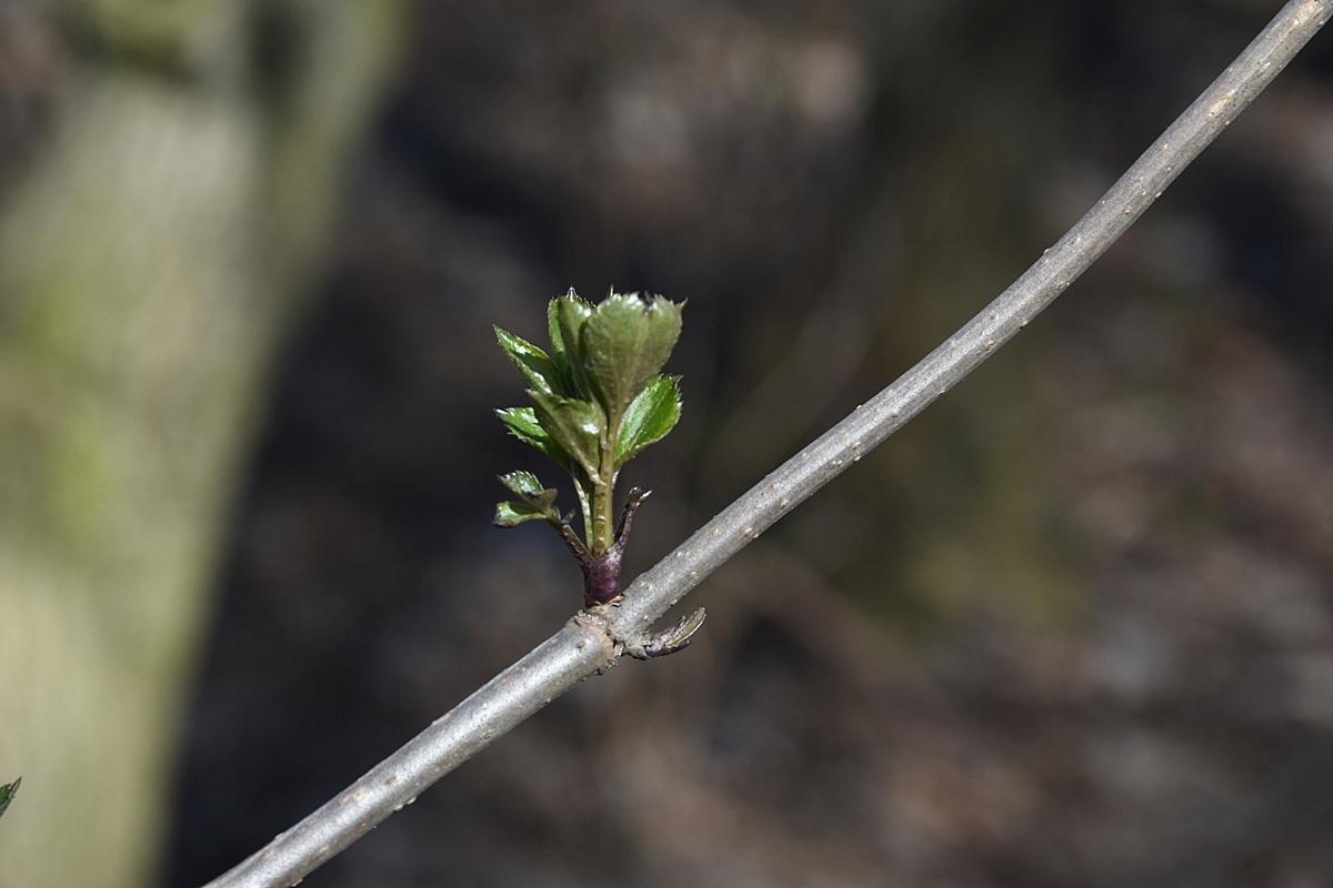 W poszukiwaniu wiosny
