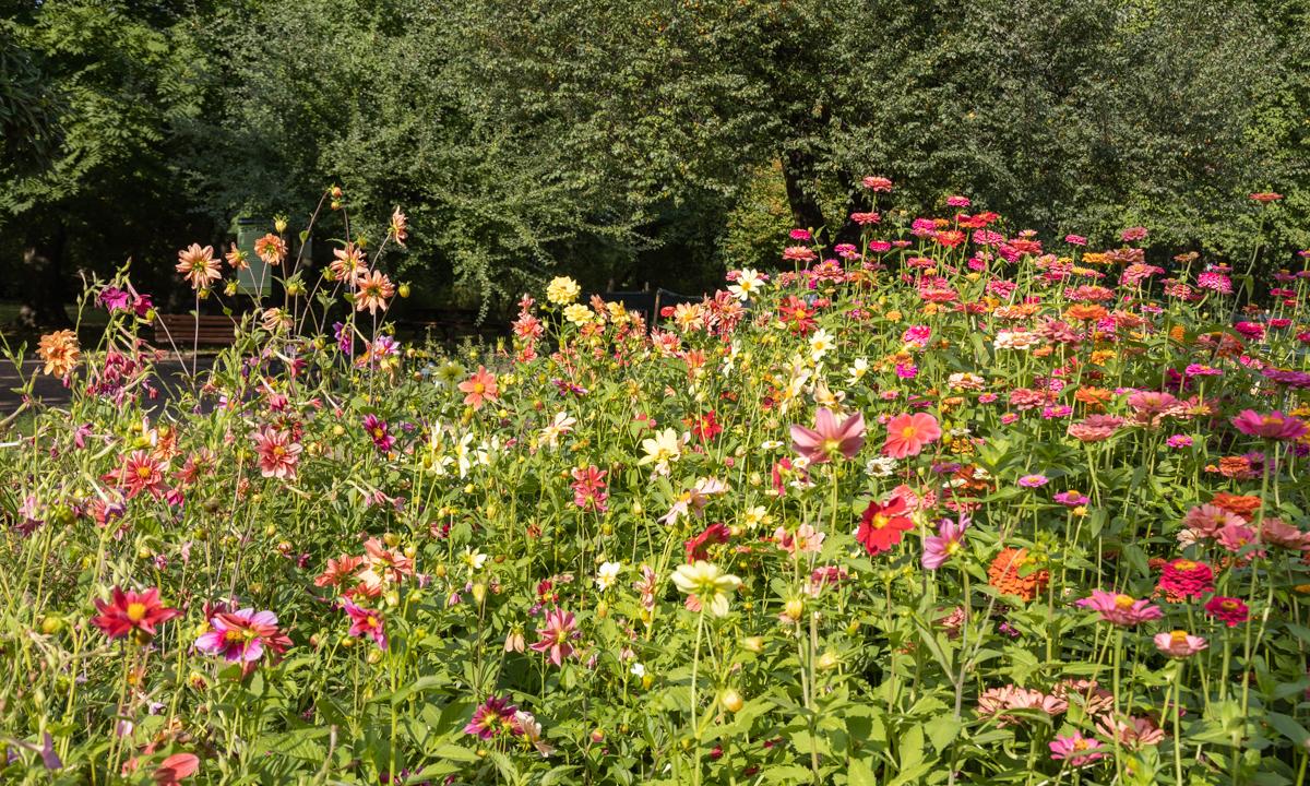 Ogród Botaniczny w Zabrzu