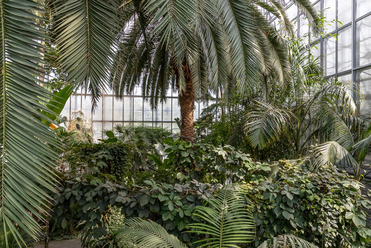Palmiarnia w Gliwicach - Wrzesień 2021